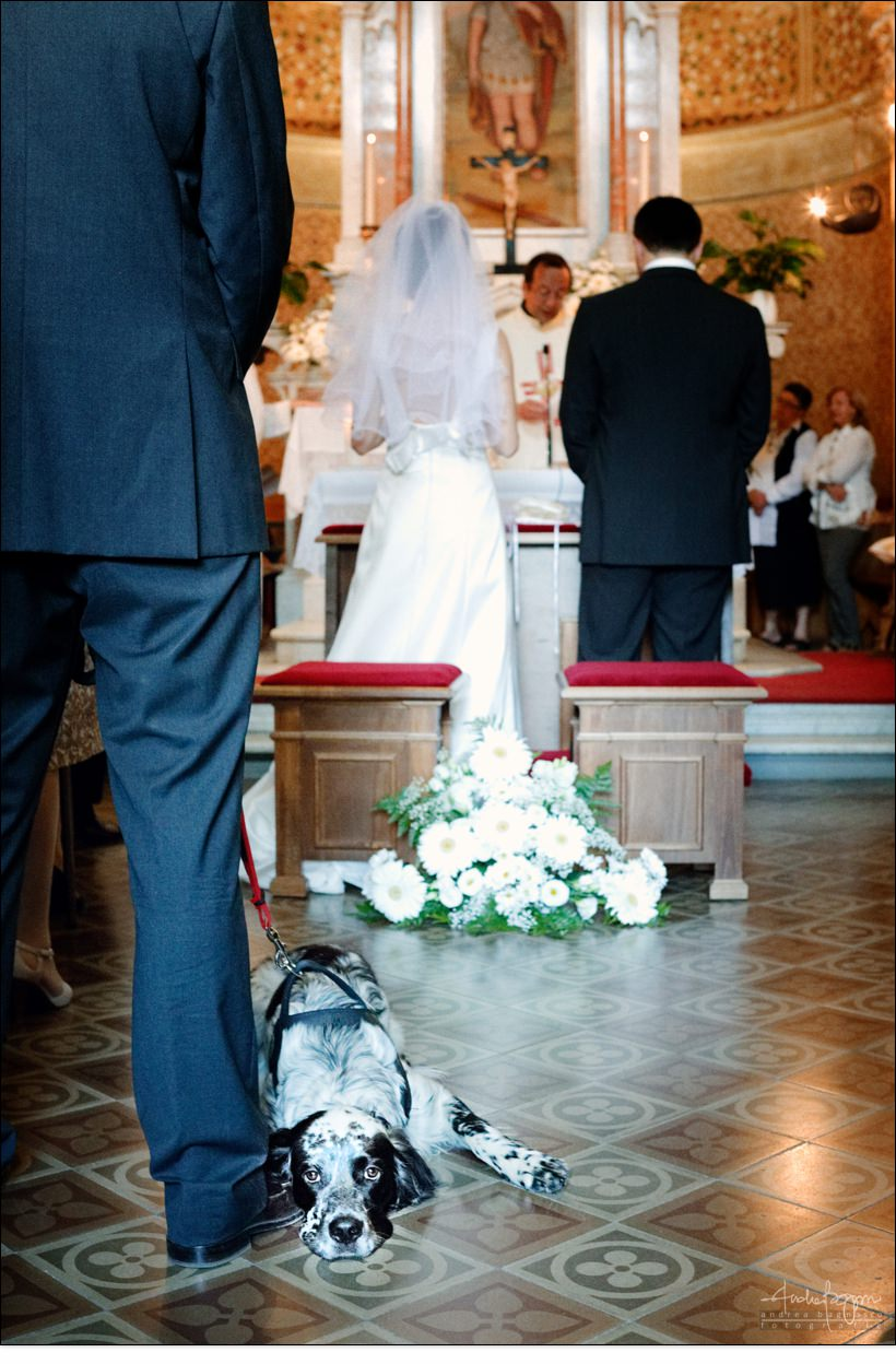 reportage matrimonio cane chiesa