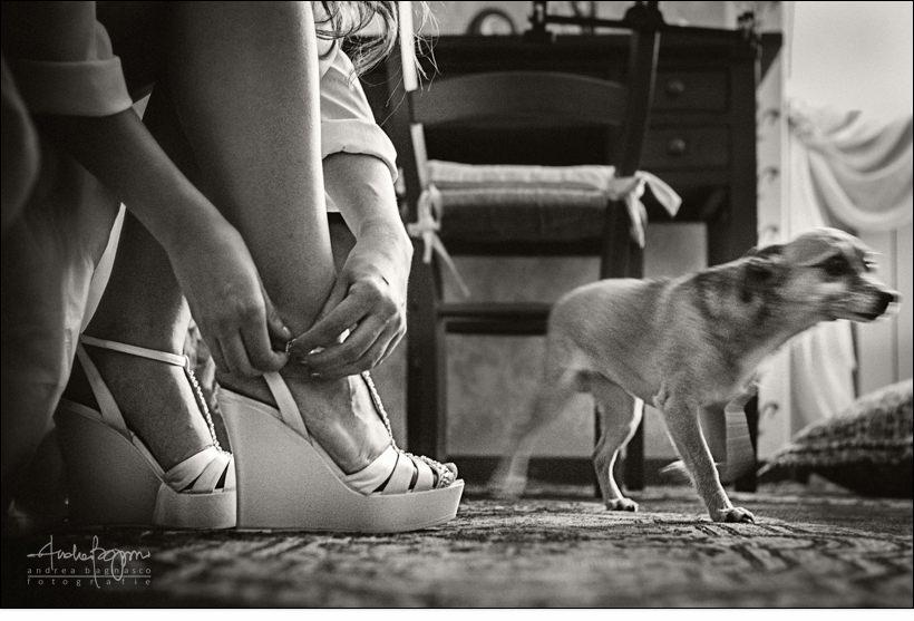 dettaglio scarpe sposa cane preparazione