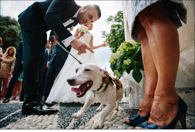cane matrimonio country chic la ginestra