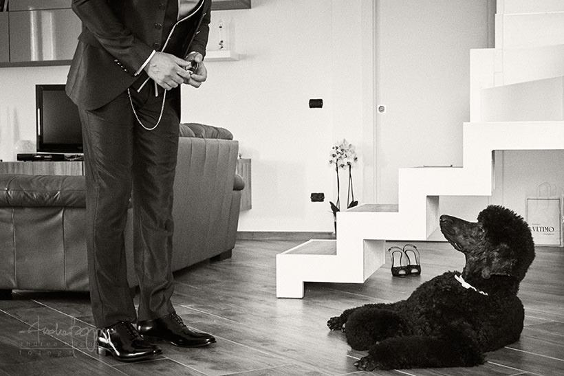 preparazione sposo cane